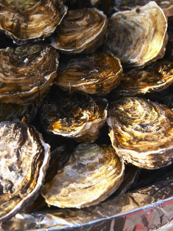 Plate of Oysters, France
