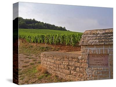 Stone Wall and Sign in the Vineyard Musigny, Domaine Comte Georges De Vogue, France