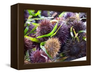 Street Market Stall with Sea Urchins Oursin, Sanary, Var, Cote d'Azur, France by Per Karlsson