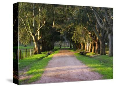 Tree Lined Country Road at Sunset, Montevideo, Uruguay