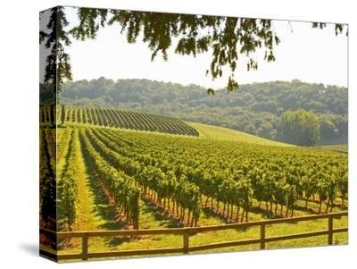 Vineyard and Valley with Forest, Chateau Carignan, Premieres Cotes De Bordeaux, France