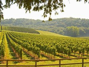 Vineyard and Valley with Forest, Chateau Carignan, Premieres Cotes De Bordeaux, France by Per Karlsson