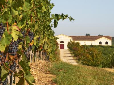Vineyards, Petit Verdot Vines and Winery, Chateau De La Tour, Bordeaux, France