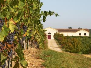 Vineyards, Petit Verdot Vines and Winery, Chateau De La Tour, Bordeaux, France by Per Karlsson