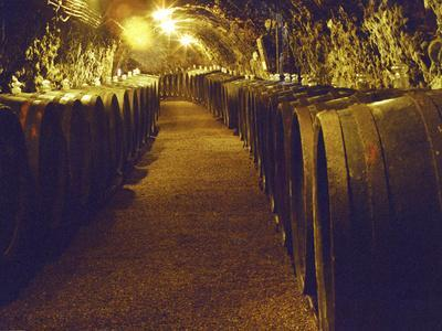 Wine Cellar with Tunnels of Wooden Barrels and Tokaj Wine, Royal Tokaji Wine Company, Mad, Hungary