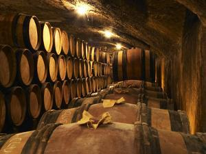 Wooden Barrels with Aging Wine in Cellar, Domaine E Guigal, Ampuis, Cote Rotie, Rhone, France by Per Karlsson