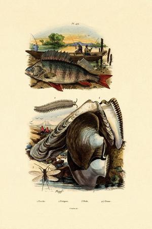 Perch, 1833-39--Giclee Print