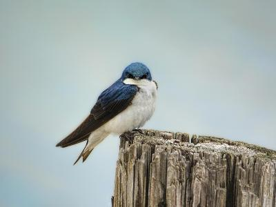 Perched and Waiting-Jai Johnson-Giclee Print