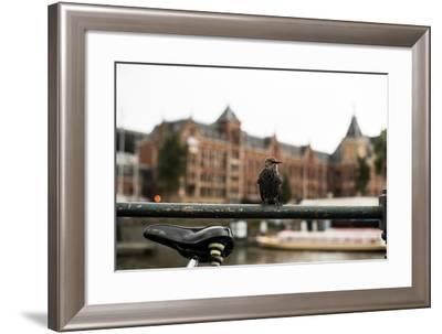 Perched I-Erin Berzel-Framed Photographic Print