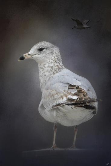Perched Nearby Gull-Jai Johnson-Giclee Print