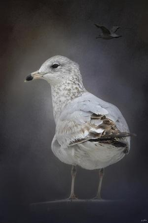 https://imgc.artprintimages.com/img/print/perched-nearby-gull_u-l-pu0pt30.jpg?p=0