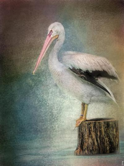 Perched Pelican-Jai Johnson-Giclee Print