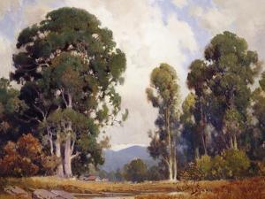 Eucalyptus by Percy Gray