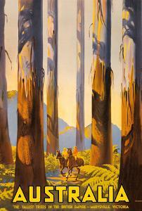 Australia - The Tallest Trees in the British Empire - Marysville, Victoria by Percy Trompf