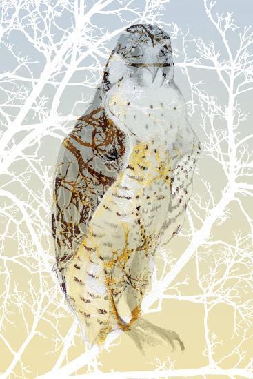 Peregrine Falcon, 2015-Nancy Moniz Charalambous-Giclee Print