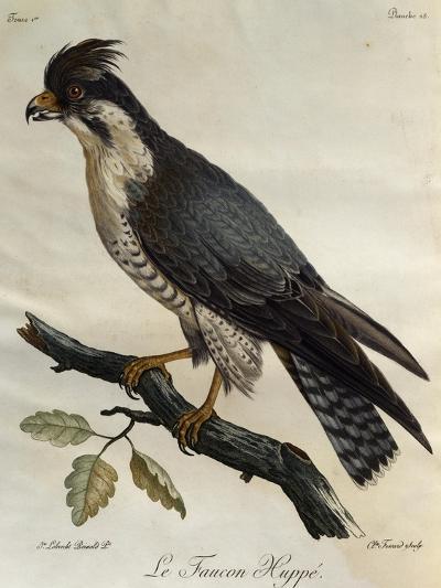 Peregrine Falcon (Falco Peregrinus)--Giclee Print