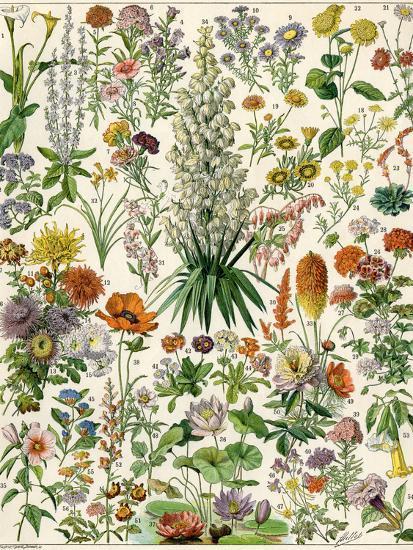 Perennial Garden Flowers, Aster, Daisy, Bleeding Heart, Geranium, Primrose, Phlox--Giclee Print