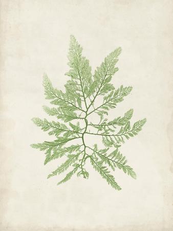https://imgc.artprintimages.com/img/print/peridot-seaweed-ii_u-l-q19zqph0.jpg?p=0