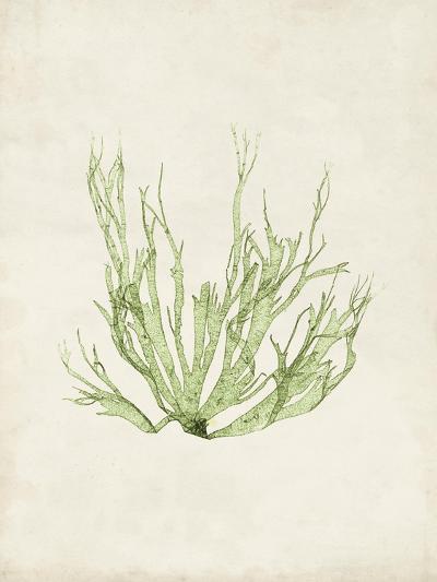 Peridot Seaweed IV-Vision Studio-Art Print