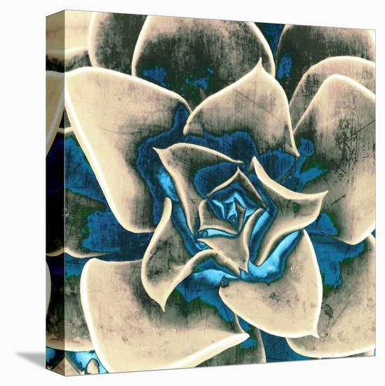 Perle Von Nurnberg Cactus--Stretched Canvas Print