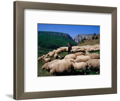 Shepherd with His Flock of Sheep, Turda, Romania