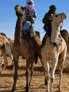 Two Taureg Men on Camels at Sahara Festival, Douz, Tunisia by Pershouse Craig