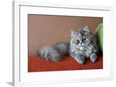 Persian Cat on the Couch-Valerio Pardi-Framed Photographic Print
