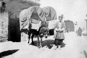 Persian Donkey Transport, Baghdad, Iraq, 1917-1919