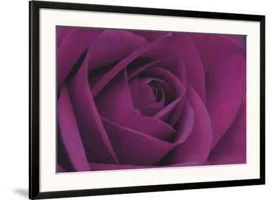 Persian Purple Rose-John Harper-Framed Art Print