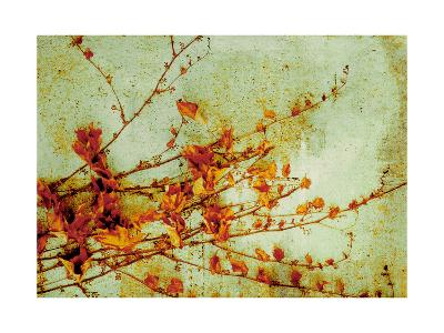 Persimmon-Andrew Michaels-Art Print