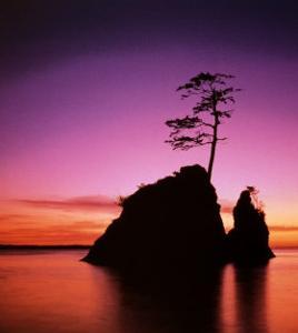 Persistence: Sunset