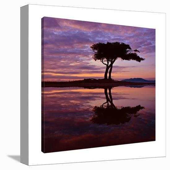 Perspectives-Dominic Liam-Gallery Wrapped Canvas
