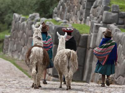 Peru, Native Indian Women Lead their Llamas Past the Ruins of Saqsaywaman-Nigel Pavitt-Photographic Print