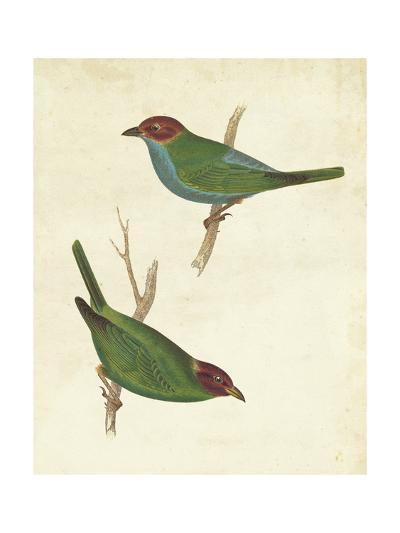 Peruvian Tanager II-Cassin-Art Print