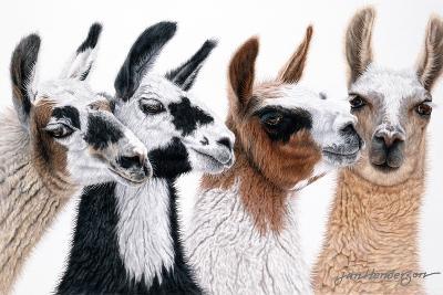 Peruvian Visitors-Jan Henderson-Photographic Print