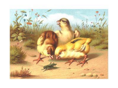 Pesky Chicks with Grasshopper--Art Print