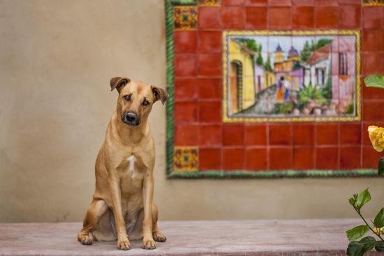 Pet Dog, Baja, Mexico--Photographic Print