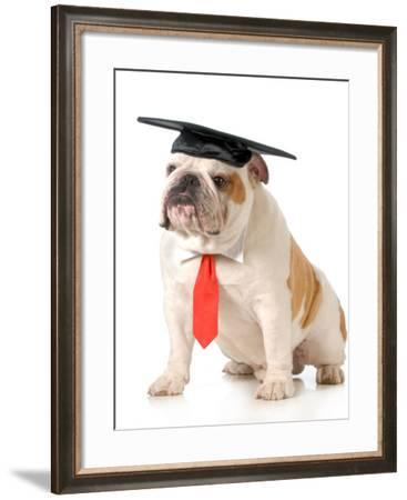 Pet Graduation - English Bulldog Wearing Graduation Cap And Red Tie-Willee Cole-Framed Photographic Print
