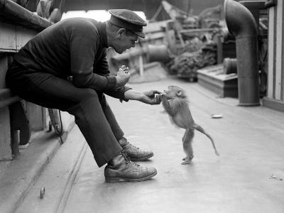 Pet Monkey--Photographic Print