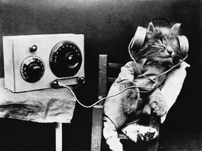 Pet Radio--Photographic Print