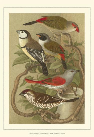 Pet Songbirds III-Cassel-Art Print