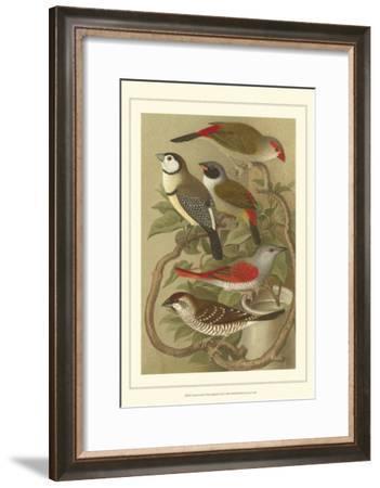 Pet Songbirds III-Cassel-Framed Art Print