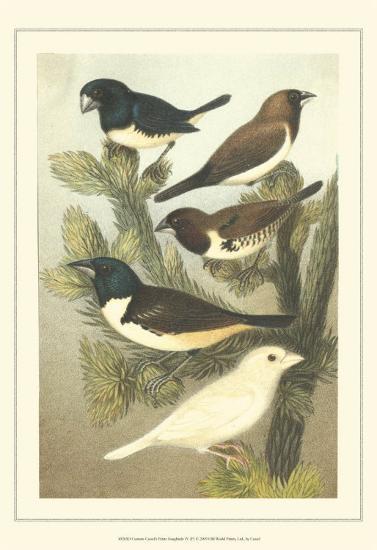 Pet Songbirds IV-Cassel-Art Print
