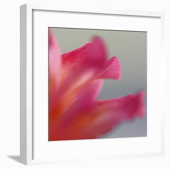 Petal Closeup III-Nicole Katano-Framed Photo
