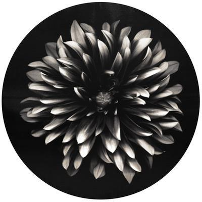 Petals - Circular Canvas Giclee Printed on 2 - Wood Stretcher Wall Art