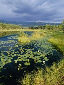 Loch and Pine Forest in Stormy Light, Strathspey, Highlands, Scotland, UK by Pete Cairns