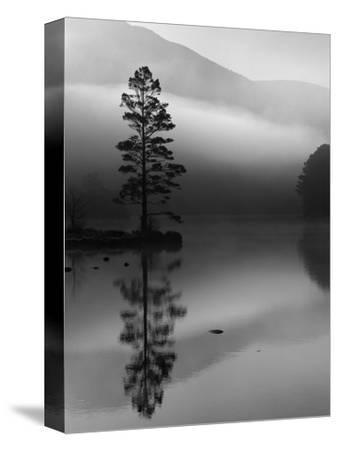Scots Pine Tree Reflected in Lake at Dawn, Loch an Eilean, Scotland, UK