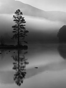 Scots Pine Tree Reflected in Lake at Dawn, Loch an Eilean, Scotland, UK by Pete Cairns