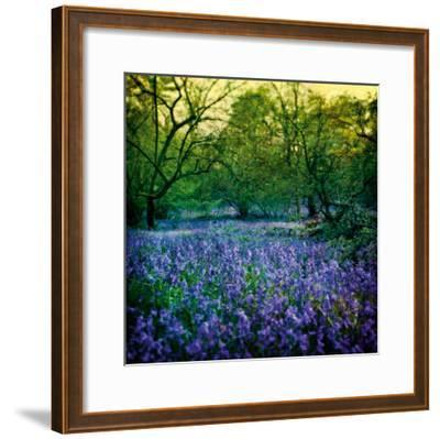 Bluebell Wood I