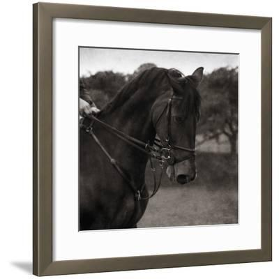 Dressage - The Collection
